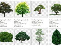 [ 樹木素材 ]  92種樹木PNG圖片素材 / 免去背樹木向量圖 / 樹木PS去背