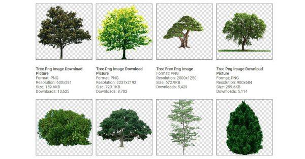 【樹去背】92種樹PNG圖片素材下載,最好用的樹木去背圖片。