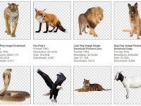【動物圖案】144種動物圖案png下載,而且都已經幫你去背好了