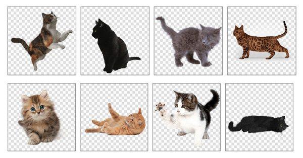 【透明背景圖】Freepng 線上10萬種透明背景圖免費下載