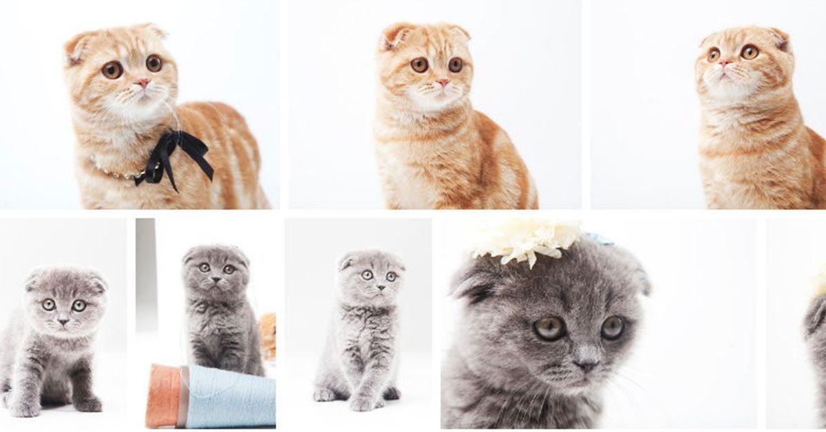 【高畫質圖片】日本免費線上高畫質圖片下載,免費高畫質首選