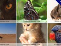 Skitterphoto 線上CC0授權圖庫 / 免費下載 / 可商業用途