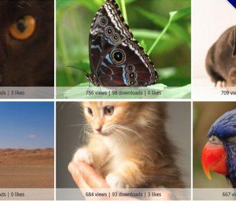 【照片圖庫】Skitterphoto 線上免費照片圖庫下載