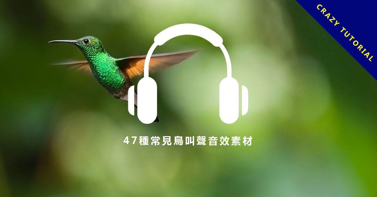 【鳥叫聲音效】47種常見鳥叫聲音效素材、麻雀、烏鴉、杜鵑、鴨子聲音