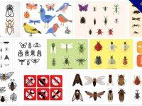 [ 昆蟲圖片 ]  100套 illustrator 昆蟲圖鑑特徵素材 / 常見昆蟲種類圖案