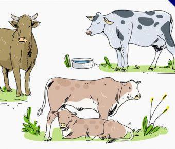 【乳牛卡通圖】34套 Illustrator 乳牛圖案下載,乳牛 q 版圖推薦款