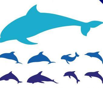 【海豚圖片】35套 Illustrator 海豚圖案下載,海豚q 版圖推薦款
