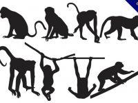 【猴子卡通圖案】38套 Illustrator 猴子圖案下載,猴子圖片推薦款