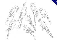 【鸚鵡卡通圖】34套 Illustrator 鸚鵡圖片下載,鸚鵡圖案推薦款