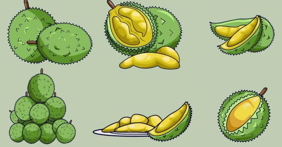 【榴槤圖片】38套 Illustrator 榴槤圖案下載,榴槤素材推薦款