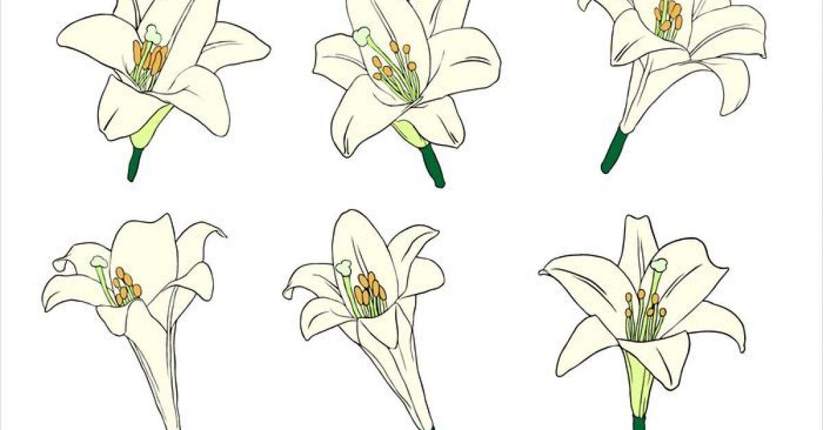 【百合花圖片】34套 Illustrator 百合花圖案下載,百合花圖騰推薦款