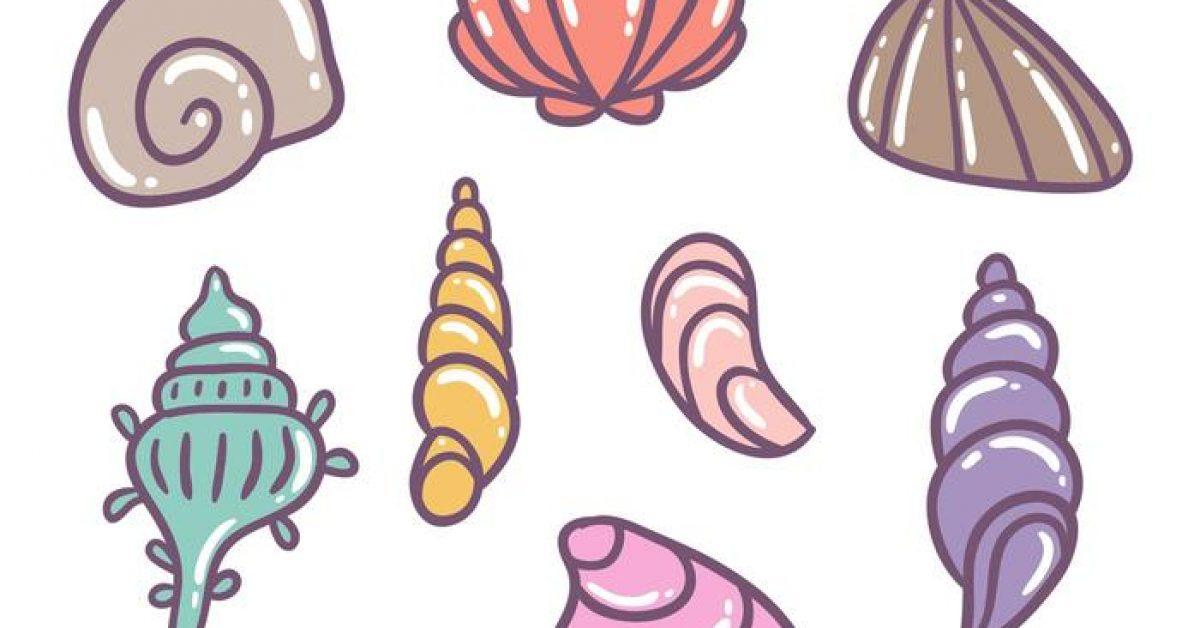 【貝殼圖案】38套 Illustrator 貝殼卡通圖下載,貝殼圖片推薦款