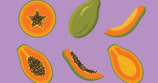 【木瓜圖片】39套 Illustrator 木瓜圖案下載,木瓜素材推薦款