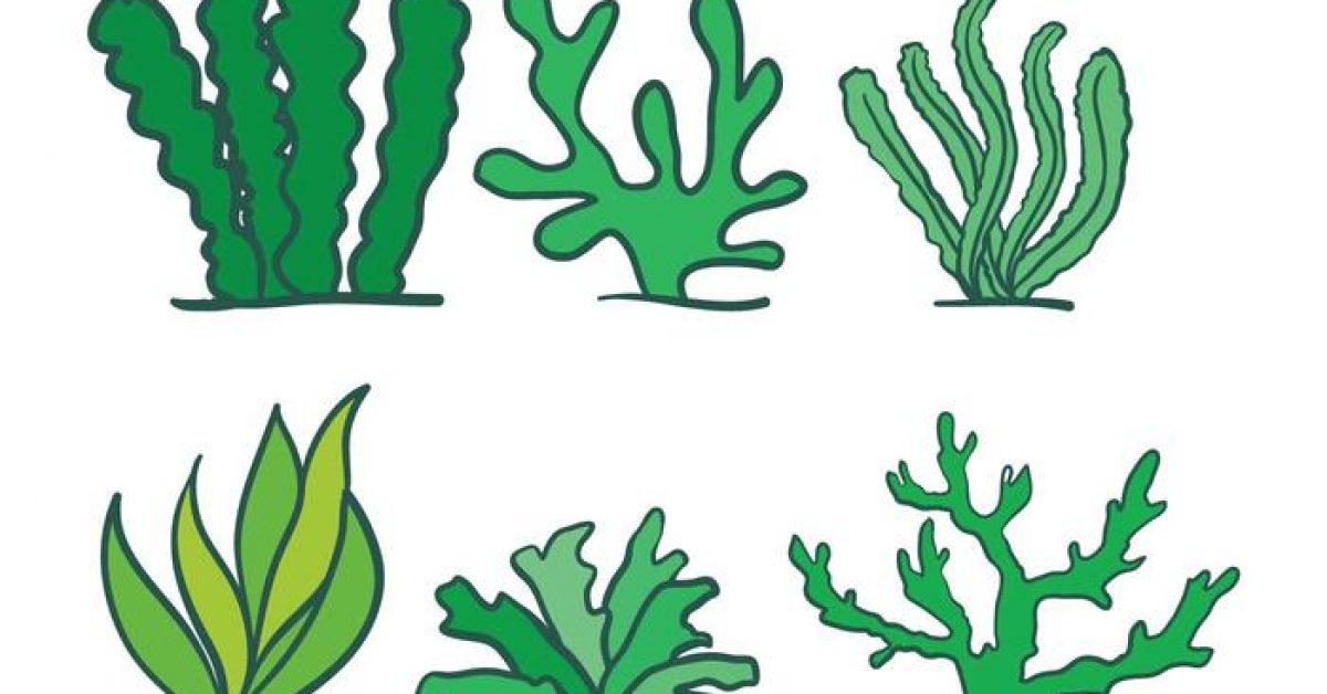 【水草卡通圖】39套 Illustrator 水草圖片下載,水草素材推薦款