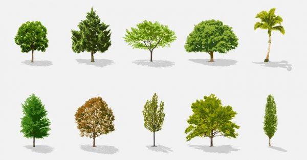 【樹圖案】67套 Illustrator 樹插圖下載,樹png推薦款