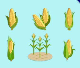 【玉米圖片】精選35款玉米圖片下載,玉米插圖免費推薦款