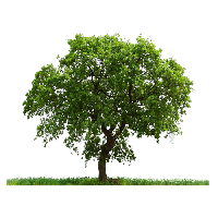 Tree Png Image Download Picture<B srcset=