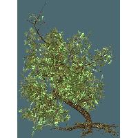 【树去背】92种树PNG图片素材下载,最好用的树木去背图片。