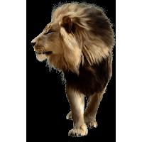 【动物图案】144种动物图案png下载,而且都已经帮你去背好了