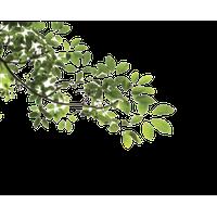 Jungle Tree Picture<B srcset=