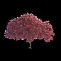 Coconut Tree<B srcset=