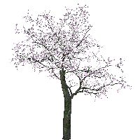 Tree Picture<B srcset=