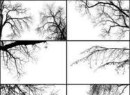 【树笔刷】35套PHOTOSHOP 树木笔刷,好用树平面笔刷素材