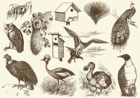 【小鸟卡通图】38套 Illustrator 小鸟图案下载,小鸟图片推荐款