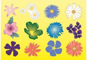【菊花图片】精选35款菊花图片下载,菊花图免费推荐款