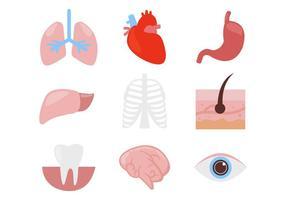 Human Organ Body Parts Icons Vector
