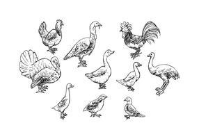 【天鹅图片】38套 Illustrator 天鹅图案下载,天鹅素材推荐款