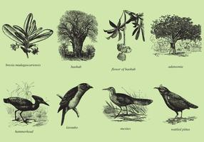 【树素材】68套 illustrator 树木素材免费下载,大树图案素材推荐