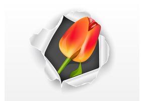 【郁金香图片】精选32款郁金香图片下载,郁金香图案免费推荐款