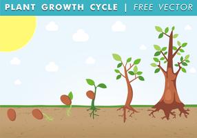 【种子图片】32套 Illustrator 种子图案下载,种子卡片推荐款