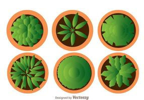 【盆栽图片】36套 Illustrator 盆栽图案下载,盆栽素材推荐款