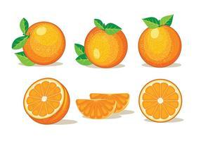 【橘子图片】精选35款橘子图片下载,橘子图免费推荐款