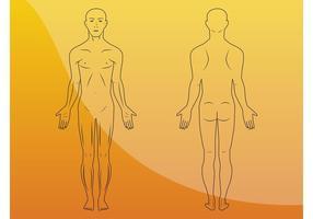 Body Illustrations