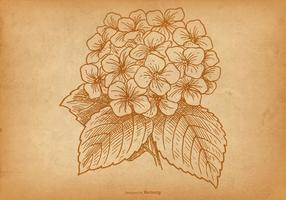 【绣球花图片】45套 Illustrator 绣球花素材下载,绣球花插画推荐款