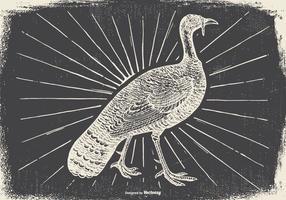 【火鸡图片】34套 Illustrator 火鸡图案下载,火鸡照片推荐款