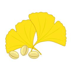 【银杏图片】精选13款银杏图片下载,银杏图案免费推荐款
