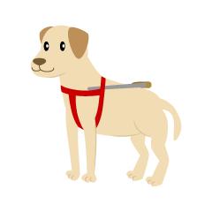 スキージャンプする犬