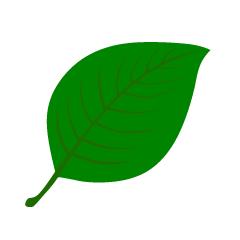 葉っぱの四角リーフ