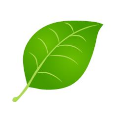 【植物素材】精选34款植物素材下载,植物图片免费推荐款