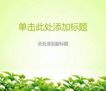 綠色清爽PPT模板下載,5頁優質的植物PPT模板模板樣式