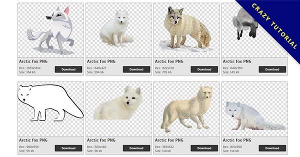 【北極狐狸PNG】精選23款北極狐狸PNG點陣圖素材免費下載,完全免去背的北極狐狸點陣圖
