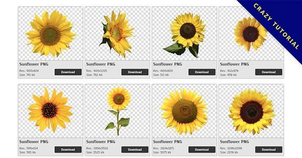【向日葵PNG】精選47款向日葵PNG點陣圖下載,免費的向日葵去背圖檔