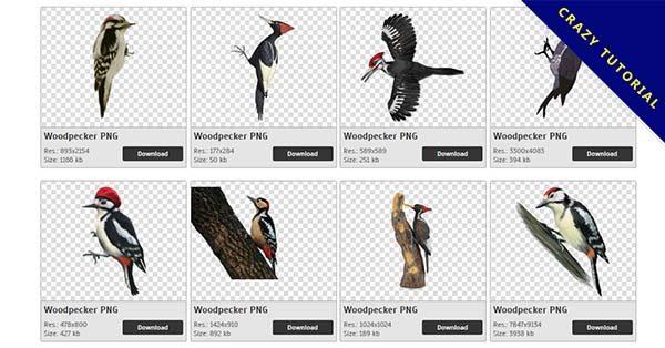 【啄木鳥PNG】精選47款啄木鳥PNG圖片素材包下載,完全免去背的啄木鳥點陣圖