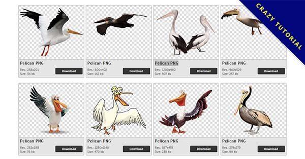 【塘鵝PNG】精選33款塘鵝PNG點陣圖素材免費下載,完全免去背的塘鵝圖片
