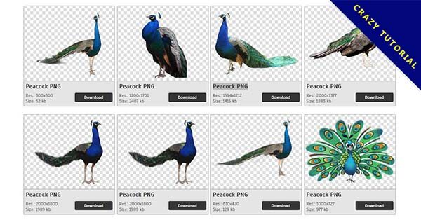【孔雀PNG】精選44款孔雀PNG圖案素材免費下載,完全免去背的孔雀圖片
