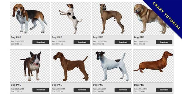【小狗PNG】精選252款小狗PNG圖案下載,完全免去背的小狗圖片